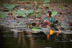 11 - Angkor Wat, Pige i Lotusblomster