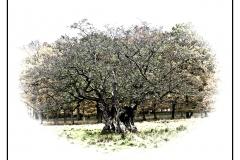 38 - Det gamle træ