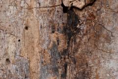 48 - Træ III