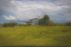 54 - Irsk Landskab