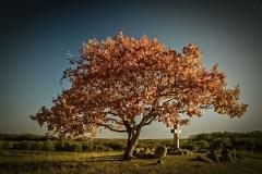 Præstens træ