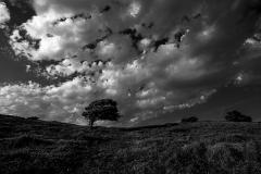 2021-07-Tree under the Skies