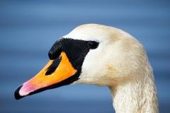 Fugle-04-11-4-34-