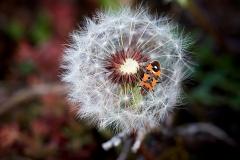 Insekter-06-01-17-37-57